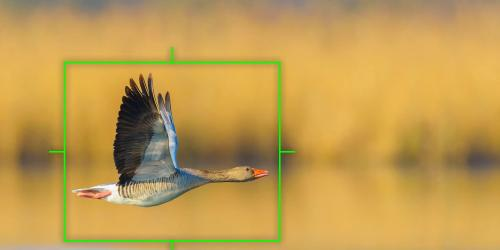 Bird Detection for Intelligent Subject Detection + RAW Video Data Output
